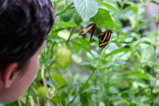 Observing Butterflies