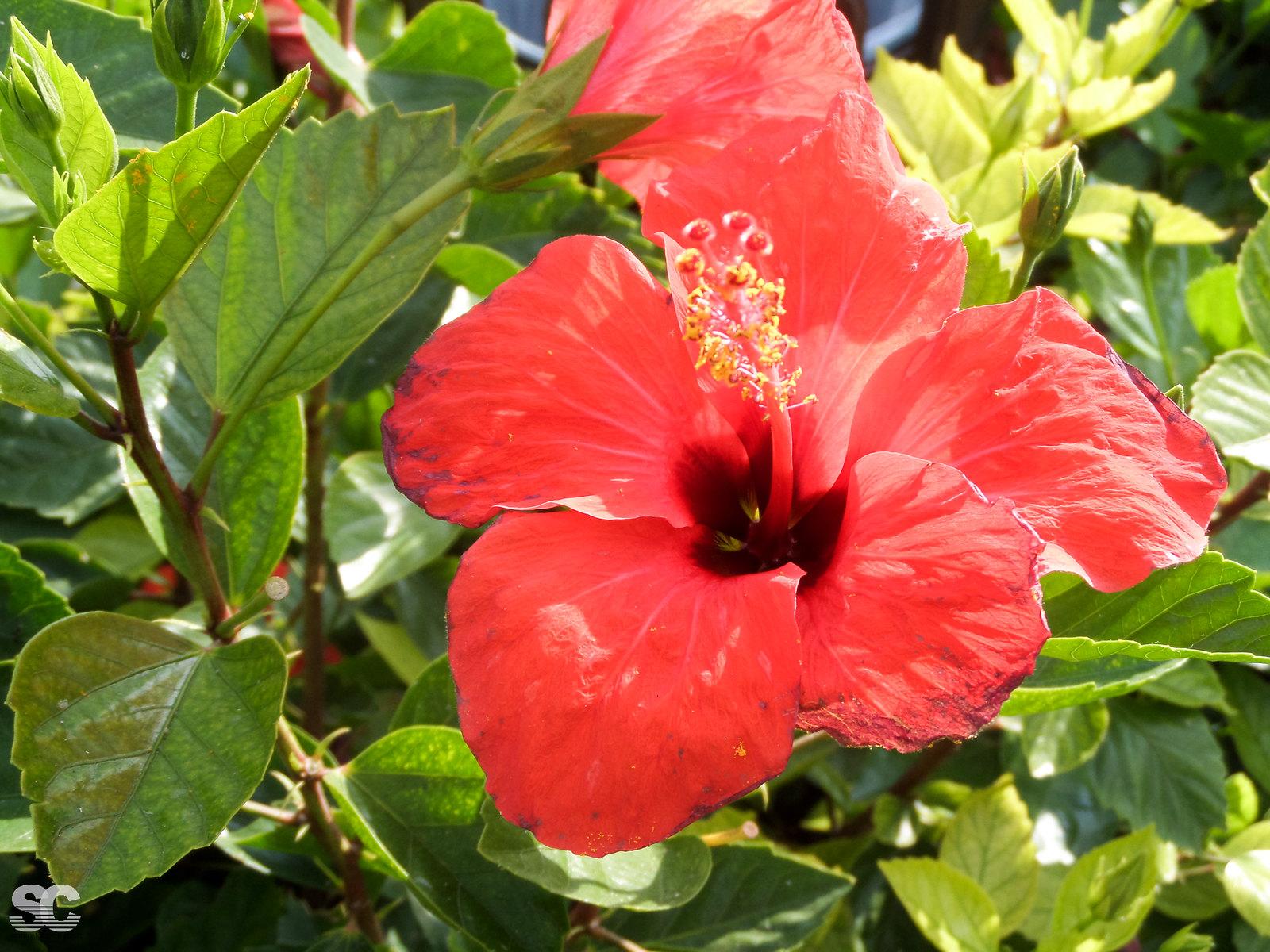 SAM_2249.jpg
