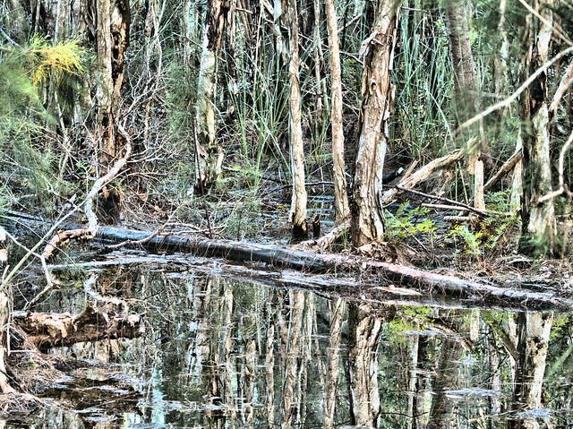 Melaleuca Swamp Bright E-M10 20170808