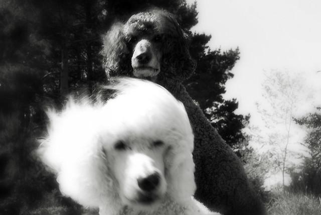 jasper and schubert....blowin' in the wind...