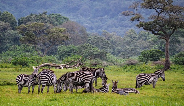 2017 - Arusha National Park - 001