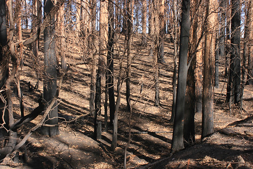 fire damage bushfires dickinson collection victorian deviation road black saturday 2009 blacksaturdaybushfires2009 deviationroad dickinsoncollection firedamage victorianbushfires kinglakecentral victoria australia au