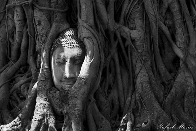 Buddha in Wat Mahathat