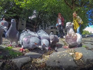 Urban Pigeon, Bristol, Ian Wade