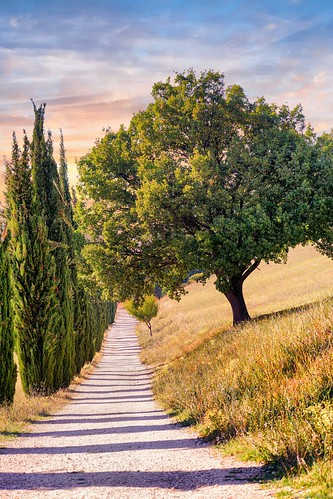 sony sonyalpha italy italia paesaggio landscape travel adventure nature scenic exploration view vista breathtaking tranquil tranquility serene serenity calm marioottaviani abruzzo toscana tuscany tree trees path countryside countryroad stradadicampagna strada sentiero alberi albero