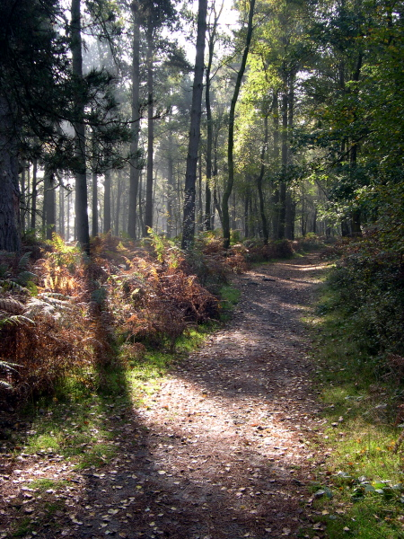 On the way to Leith Hill 1
