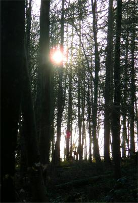 a Trees in Silhouette 2