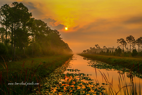 gold golden canal water sky morning morningsky sunrise dawn landscape nature mothernature hungryland joneshungrylandwildlifeenvironmentalarea martincounty florida usa outdoors greatoutdoors