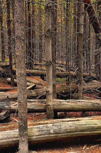 eechillington nikond90 viewnx2 corelpaintshoppro yellowstone artistspaintpots trees nature patterns explore flickrexplored