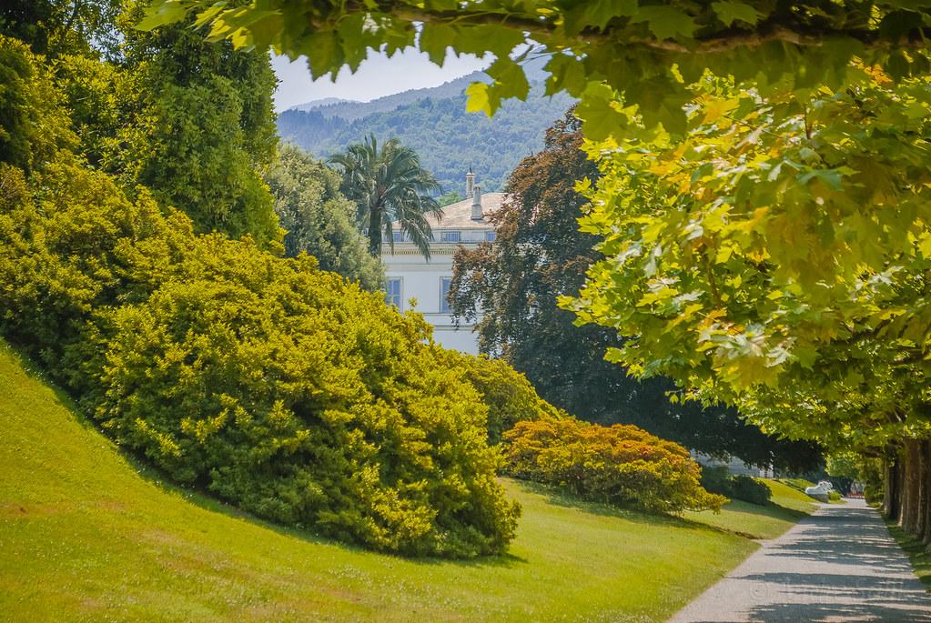 Буйство солнечной зелени! DSC_7303