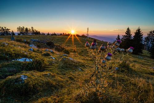 a7ii distel graz landschaft sony schöckl sommer styria sun goldenhour ilce7m2 loxia21mm loxia2821 outdoor sunrise sunstar thistle