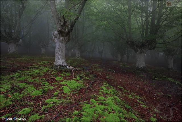 El Bosque animado -The animated forest