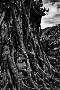 Ayutthaya Buddha | by BaboMike