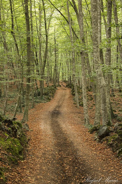 Road of silence