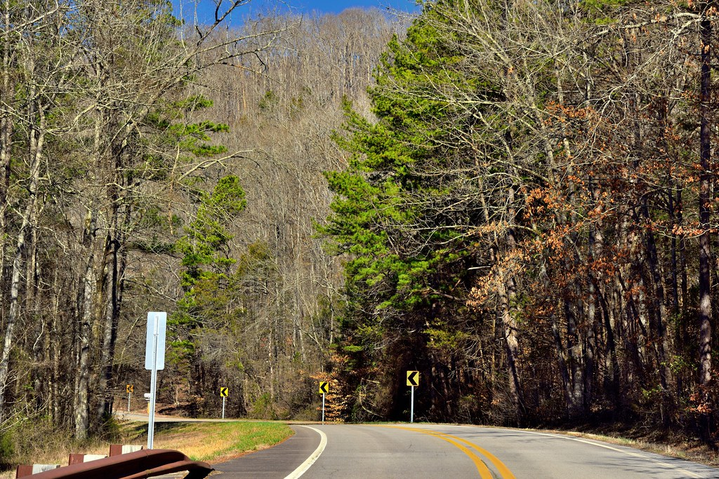 A Scenic Drive (or Walk) Amongst the Trees in the Ozark National Forest