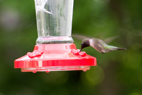 First Hummingbird visitor