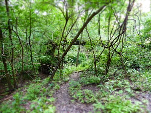 summer green nature forest woods trail vegetation greenery myhappyplace stlouiscountymo ohlendorfwestpark