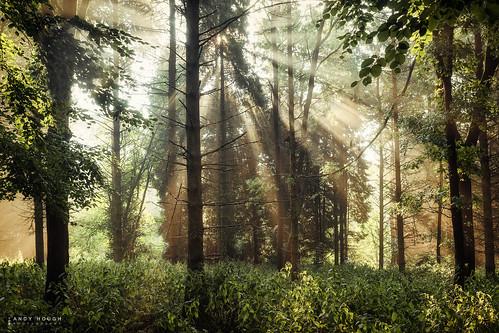 wood summer england green sunshine sunrise woodland outdoors unitedkingdom sony gb rays sunrays crepuscular southoxfordshire littlewittenham a99 sonyalpha andyhough slta99v littlewittenhamwood andyhoughphotography