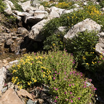Seasonal stream below Spot Mountain