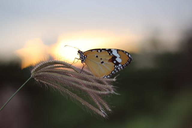 A butterfly alight meadow