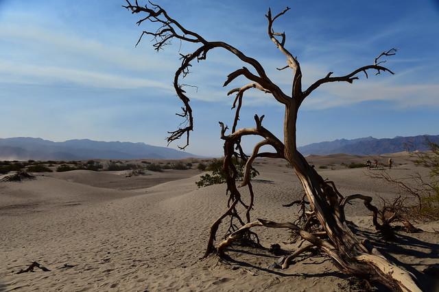 Mesquite Flat Sand dunes, Death Valley, California, US August 2017 1610