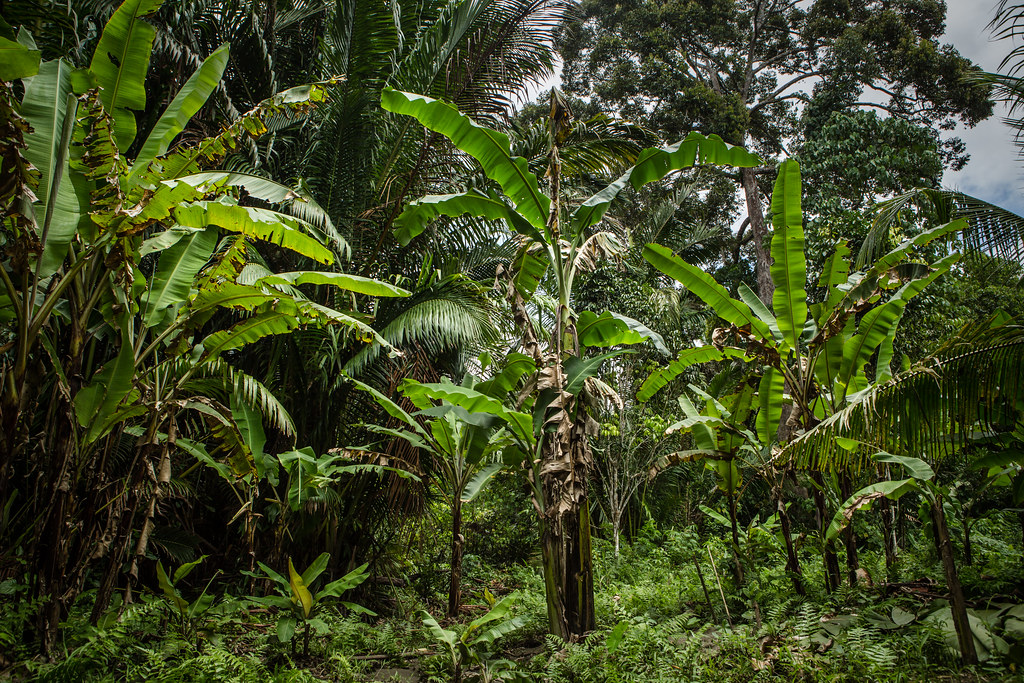 Tropical food forest. Credit: CIFOR/Flickr
