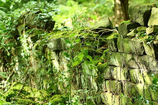 Old wall in Stone Top Wood Yeadon Leeds