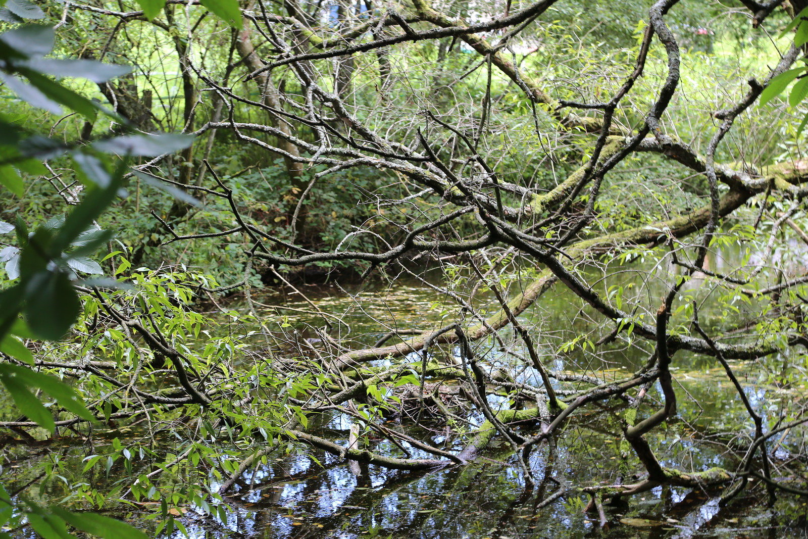 Pond and Wood - Pulborought to Petworth