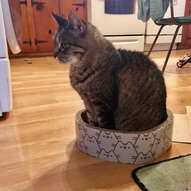 If It Fits, I Sits 🐱