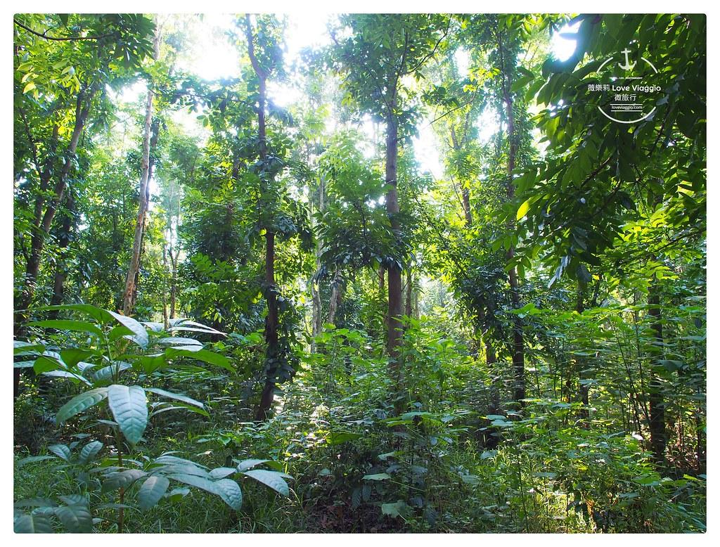 【台南 Tainan】虎山林場 城市中的森林祕境 午後漫步小葉欖仁林間步道 @薇樂莉 Love Viaggio | 旅行.生活.攝影