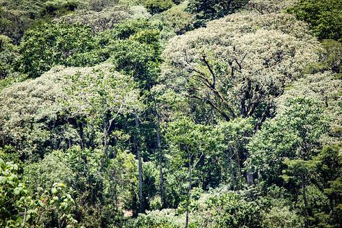 biodiversity landscape landtenure landuse degradedforests landscapes mau rainforests trees agriculturalland forests foresttrees kenya foodproductions agriculture tenuresystems foodsecurity tropicalforests landmanagement deforestation agriculturalproduction multiplelanduse bomet ke