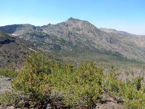 pinusalbicaulis whitebarkpine subalpine jarbidgemountains elkocounty nevada native tree pinaceae cougerpeak matterhornpeak