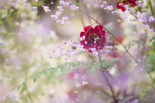 In the garden | by s.pither