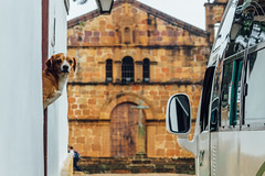 Dog Watching Bus, Barichara Colombia