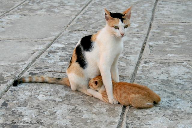La mamma è sempre la mamma