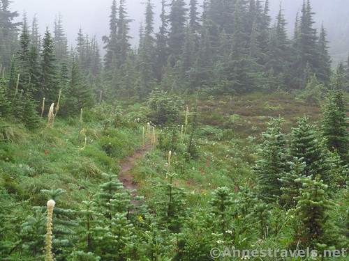 Forests and meadows along the Timberline Trail near McNeil Point, Mount Hood National Forest, Oregon