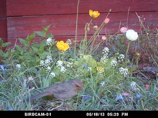 bird WSBC0023 with birdcam