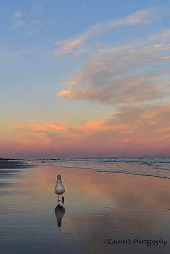 laurensphotography lauren3838photography beach sand ocean atlanticocean nj jerseyshore newjersey nikon d750 birds seagulls sunset clouds sky nature ilovenature