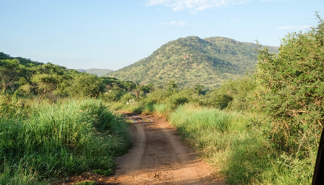 Landscape with road in Pilanesberg, South Africa