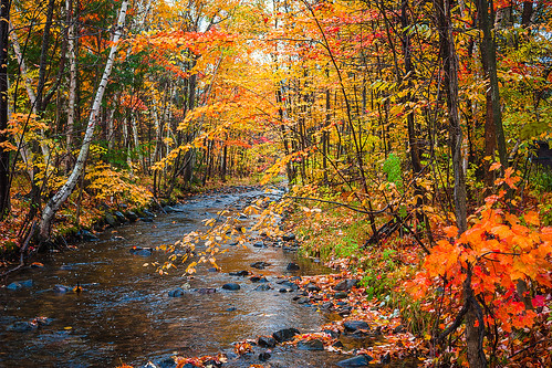 canon nh newengland newhampshire rebel robcliffordphotography robertallanclifford xsi autumn brook color fall foliage forest gilford landscape leaves outdoor photography poorfarmbrook rain river robertcliffordcom serene stream tree trees water wet