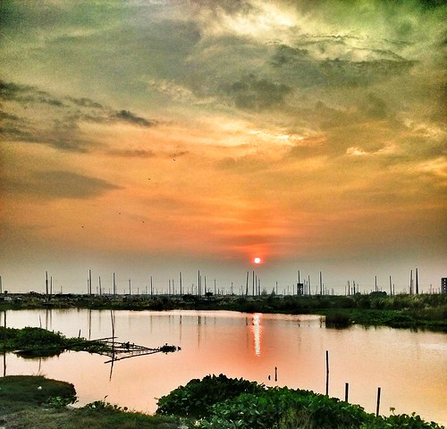 beautifulbangladesh saccharumspontaneum sunset beautyofnature