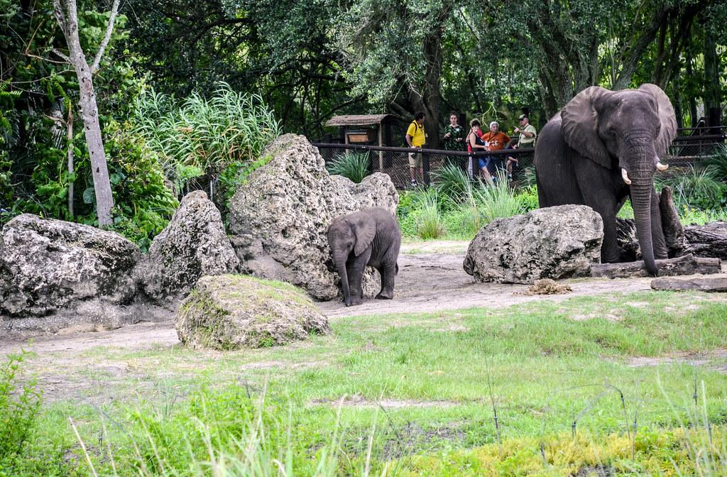 Baby elephant WAT AK