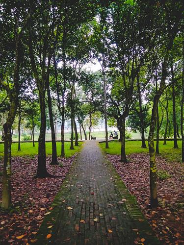 rangpur rangpurdivision bangladesh bd nature green tree beautiful xiaomi redmi