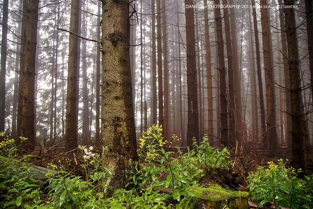 Bosque del Taunus bajo la lluvia