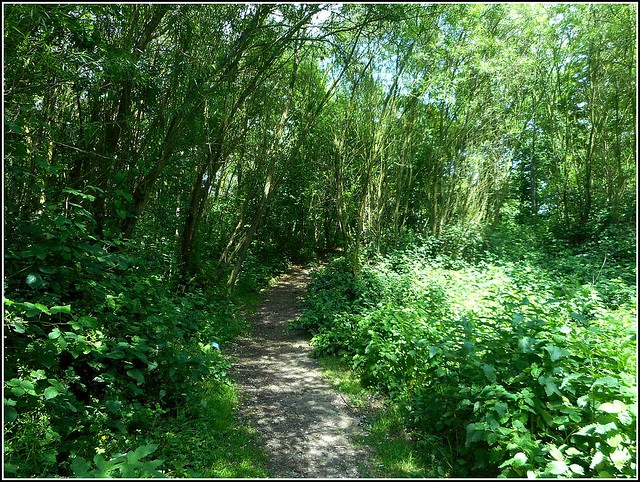 Woodlands Walk..
