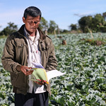 31351-013 and 31351-014: Smallholder Development Project in Lao PDR