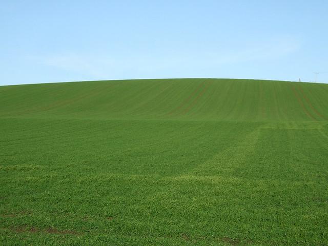 Windows XP field?