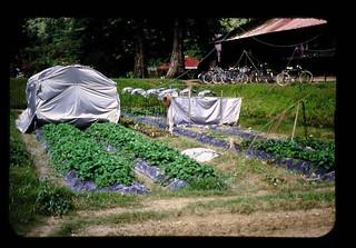 熱帯への温帯野菜導入