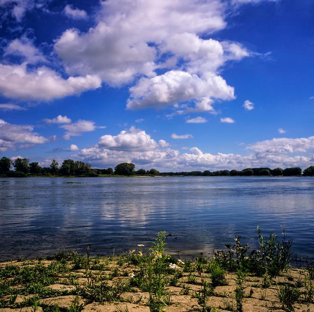 Ein Sommertag an der Elbe (in explore)