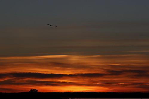 burn sunset solnedgång afterglow kvällsglöd clouds moln silhouette siluett hornborgarsjön geese gäss birds fåglar nature natur eos ef70210mmf4macro